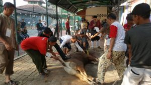 Pemotongan sapi kurban
