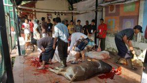 Pemotongan hewankurban